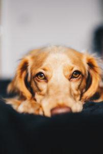 Grieving Pets
